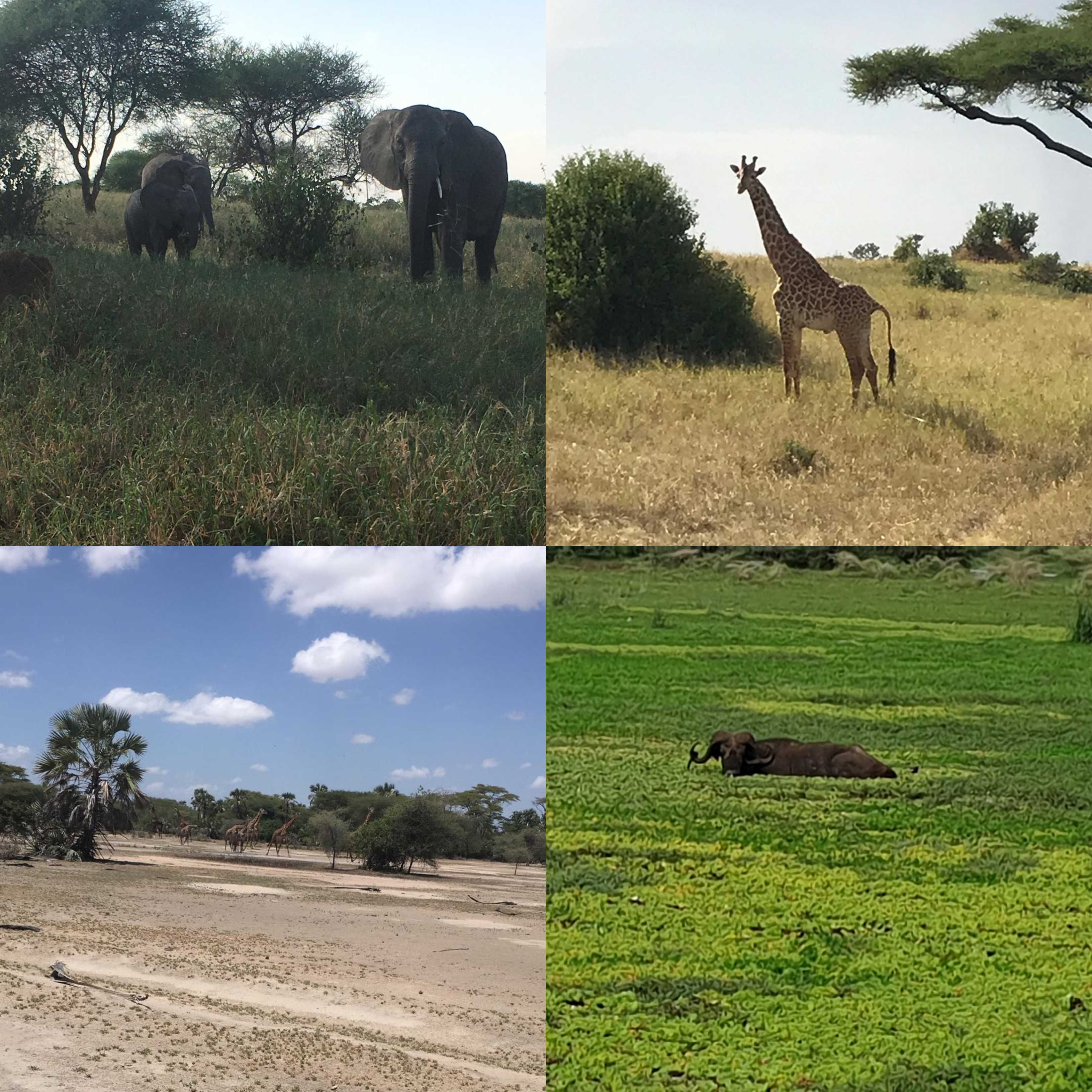 Africa Animals Montage | Lisa's African Adventure | Erne Travel