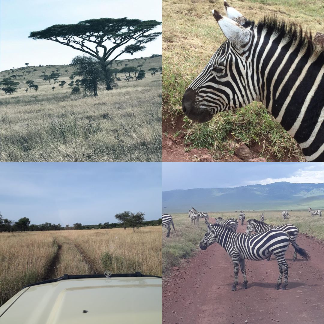 Serengeti National Park | Lisa's Africa Adventure | Erne Travel